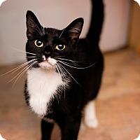Adopt A Pet :: Mavis - Fredericksburg, VA