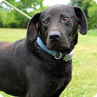 Adopt A Pet :: Davy Crockett~meet me~ - Glastonbury, CT