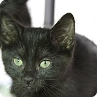 Adopt A Pet :: Kappa - Sarasota, FL