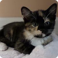 Adopt A Pet :: Carmen - Duluth, GA