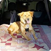 Adopt A Pet :: Gillian - New Canaan, CT