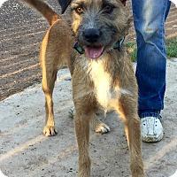 Adopt A Pet :: Fern - Phoenix, AZ