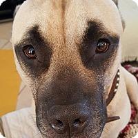 Adopt A Pet :: Otis - Orlando, FL
