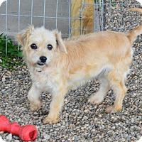 Adopt A Pet :: Myrna - Prole, IA