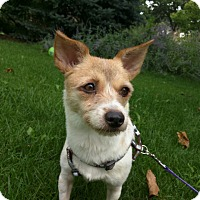 Adopt A Pet :: Princess - Lisle, IL