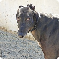 Adopt A Pet :: Boyd - Aurora, OH