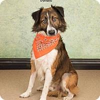 Adopt A Pet :: Bandit - Waynesboro, PA