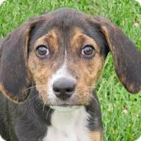 Adopt A Pet :: Katana - Woodstock, IL
