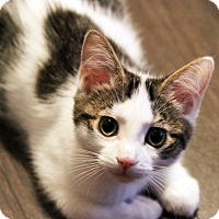 Adopt A Pet :: Kimi - Toronto, ON
