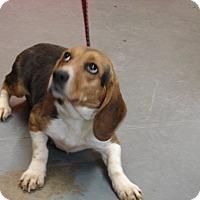 Adopt A Pet :: Annie - Aurora, IL