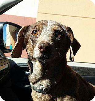 Adopt A Pet :: Sway  - Snow Hill, NC