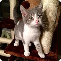 Adopt A Pet :: Rory - Sarasota, FL