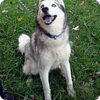 Adopt A Pet :: Silver - Boyertown, PA