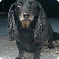 Adopt A Pet :: CODY - Portland, OR