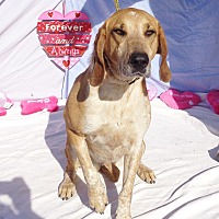 Adopt A Pet :: Especial - West Chicago, IL