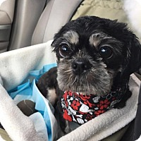 Adopt A Pet :: Chewy2 - N. Babylon, NY