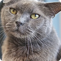 Adopt A Pet :: Bob - LaGrange, KY