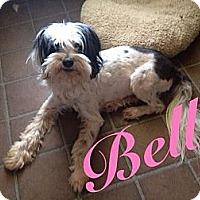 Adopt A Pet :: Belle - Orange Cove, CA