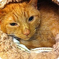 Adopt A Pet :: Reggie - Pittstown, NJ