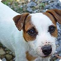 Adopt A Pet :: ROGUE - Scottsdale, AZ