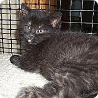 Adopt A Pet :: Tilly - Acme, PA