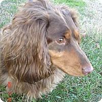 Adopt A Pet :: Frodo - Stilwell, OK