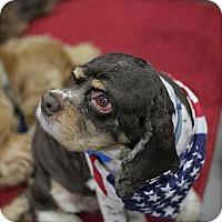 Adopt A Pet :: Reggie - Tacoma, WA