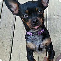 Adopt A Pet :: ReeCee- In Louisville KY - Dayton, OH