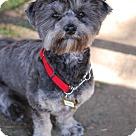 Adopt A Pet :: ZOOMY