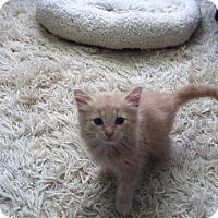 Adopt A Pet :: Bug - Fairborn, OH