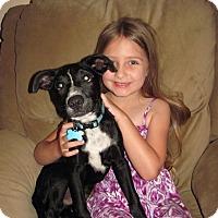 Adopt A Pet :: Sid - Homer, NY