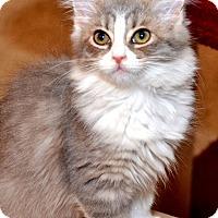 Adopt A Pet :: Gwenabee - Davis, CA
