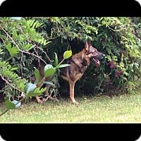 Adopt A Pet :: Brego - Houston, TX