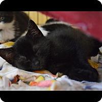 Adopt A Pet :: Alpine - Island Park, NY