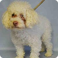 Adopt A Pet :: Taffeta - Bernardston, MA
