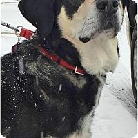 Adopt A Pet :: Millie - Berkeley Heights, NJ