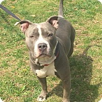 Adopt A Pet :: Aster - Bloomfield, CT