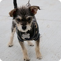Adopt A Pet :: Channing Tatum-Adopted! - Detroit, MI