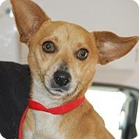 Adopt A Pet :: Raymon - Brooklyn, NY