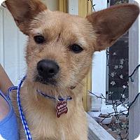 Adopt A Pet :: Sandra - Encino, CA