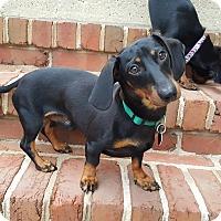 Adopt A Pet :: Bruno - New Oxford, PA