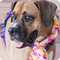 Adopt A Pet :: Addie - Chandler, AZ