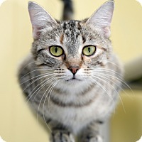Adopt A Pet :: Darcy - Chattanooga, TN