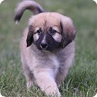 Adopt A Pet :: Bode - Mechanicsburg, PA