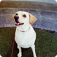 Adopt A Pet :: Kevin James - Los Angeles, CA