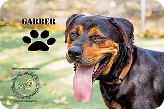 Rottweiler Mix Dog for adoption in Kansas City, Missouri - Garber