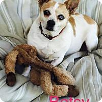 Adopt A Pet :: Betsy - Santa Clarita, CA