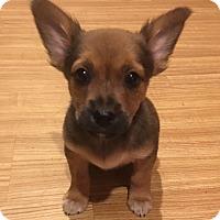 Adopt A Pet :: Larry - Lexington, KY