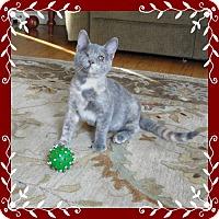 Adopt A Pet :: Nina-lyn - Mt. Prospect, IL
