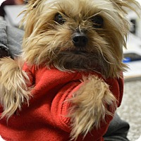 Adopt A Pet :: Moby - Fryeburg, ME